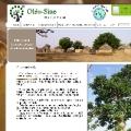 Oleosine, huile de baobab